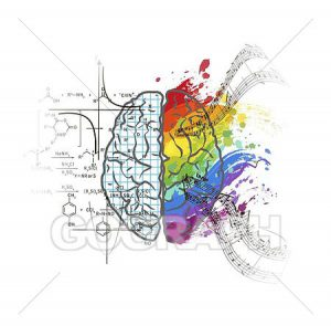 left right brain lobes and professions